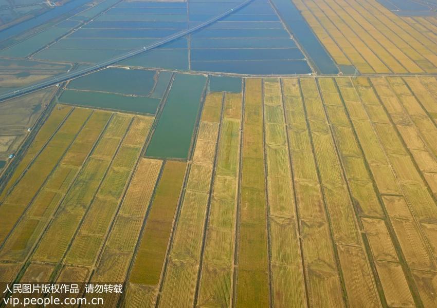 电子游戏平台:土壤改良有四维?新技术或可大规模推广海水稻种植